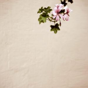 Flower #10102