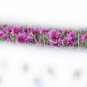 Parallel botany #5070