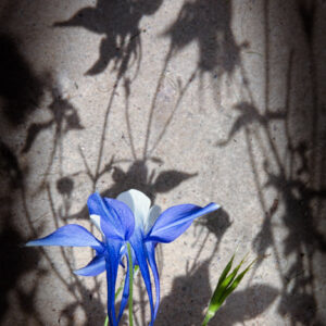 Parallel botany #5148