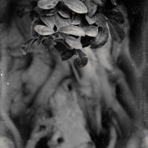 Parallel botany #5175
