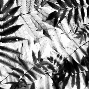 Parallel botany #5229