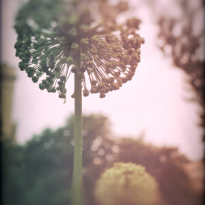 Parallel botany #5242