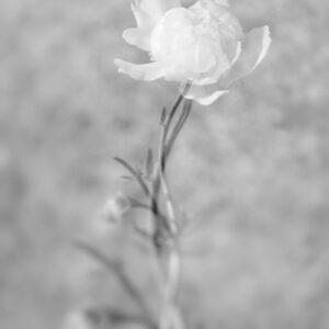 Parallel botany #7524