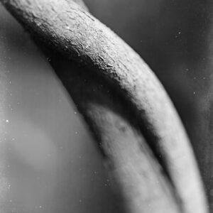Parallel botany #8364