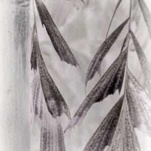 Parallel botany #8386