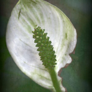 Parallel botany #8395