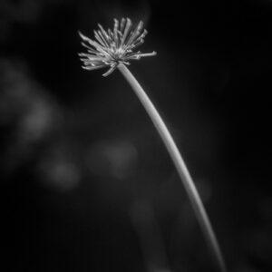 Parallel botany #8413