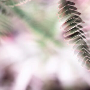 Parallel botany #8418