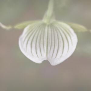 Parallel botany #8437