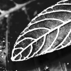Parallel botany #8444
