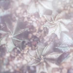 Parallel botany #8453