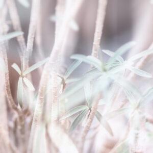 Parallel botany #8454
