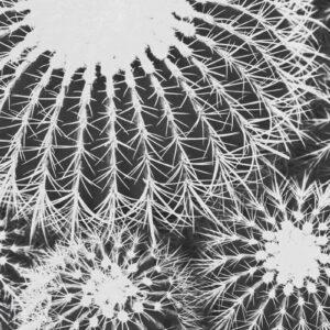 Parallel botany #8455