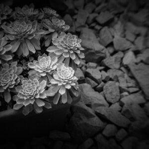 Parallel botany #8474