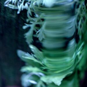 Parallel botany #8492