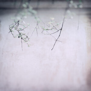 Parallel botany #8497