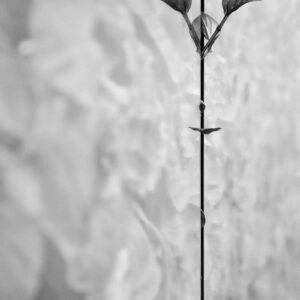 Leaf #9175