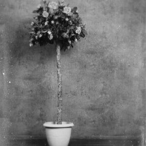 Parallel botany #8564