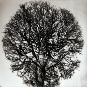 Tree #171