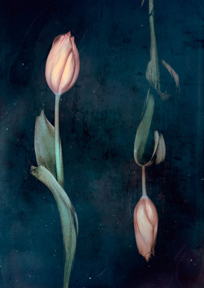 Parallel botany #8282